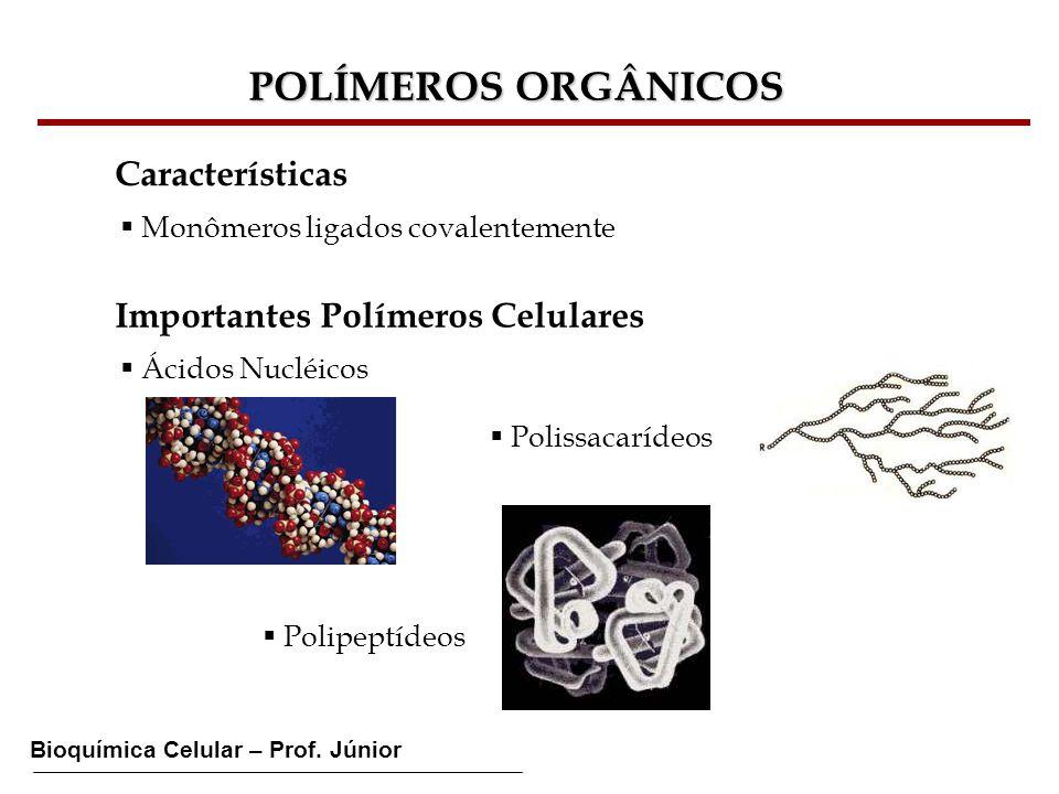 Bioquímica Celular – Prof. Júnior POLÍMEROS ORGÂNICOS Características Monômeros ligados covalentemente Importantes Polímeros Celulares Ácidos Nucléico
