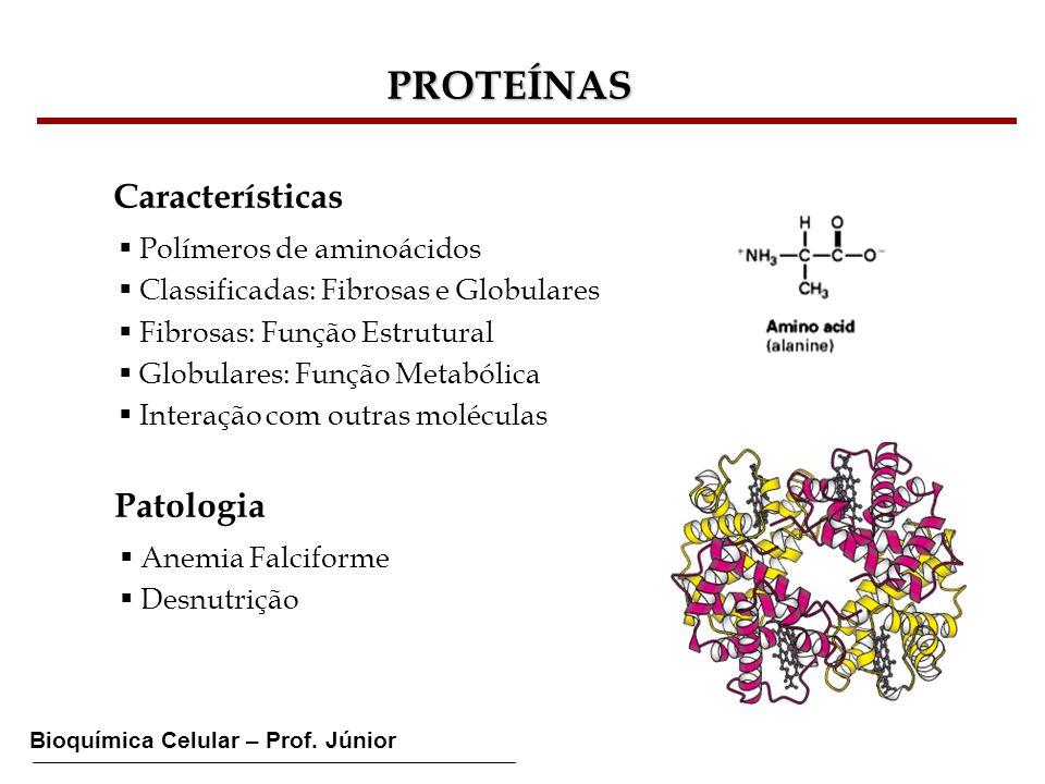 Bioquímica Celular – Prof. Júnior PROTEÍNAS Características Polímeros de aminoácidos Classificadas: Fibrosas e Globulares Fibrosas: Função Estrutural