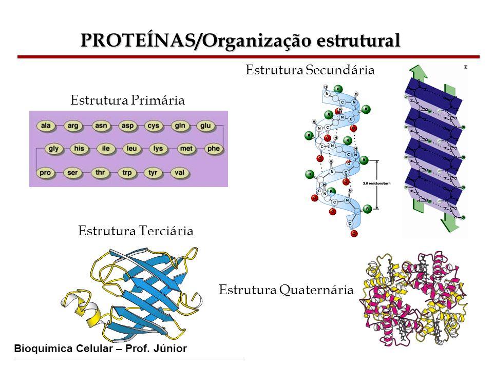 Bioquímica Celular – Prof. Júnior PROTEÍNAS/Organização estrutural Estrutura Primária Estrutura Secundária Estrutura Terciária Estrutura Quaternária