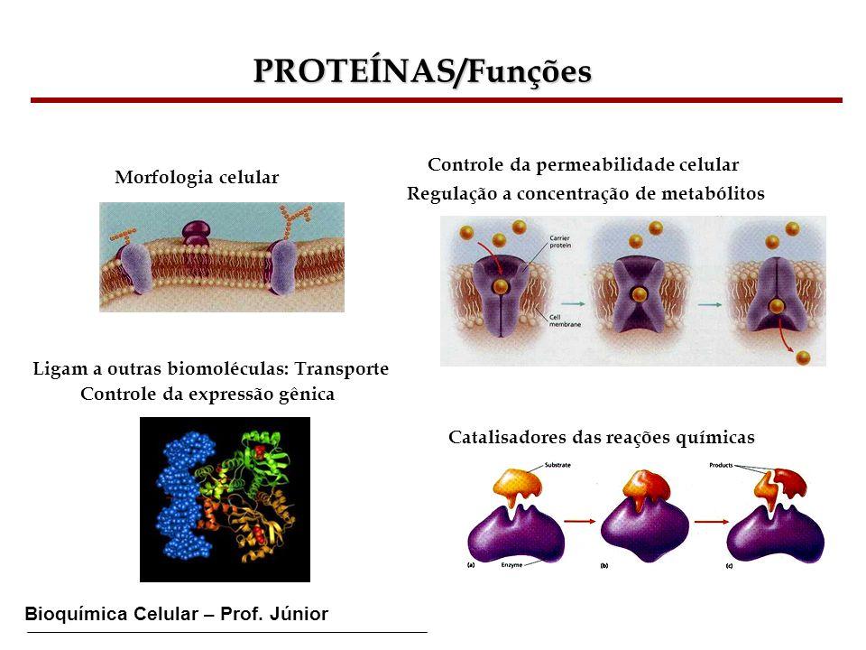 Bioquímica Celular – Prof. Júnior PROTEÍNAS/Funções Morfologia celular Catalisadores das reações químicas Controle da permeabilidade celular Regulação