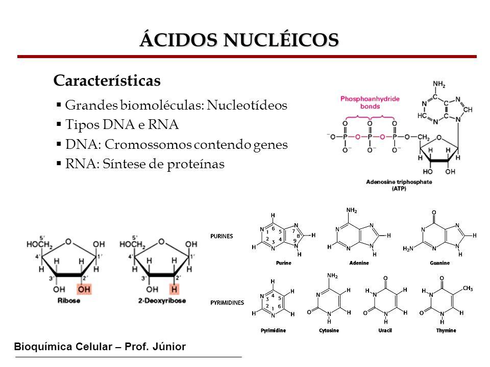 Bioquímica Celular – Prof. Júnior ÁCIDOS NUCLÉICOS Características Grandes biomoléculas: Nucleotídeos Tipos DNA e RNA DNA: Cromossomos contendo genes