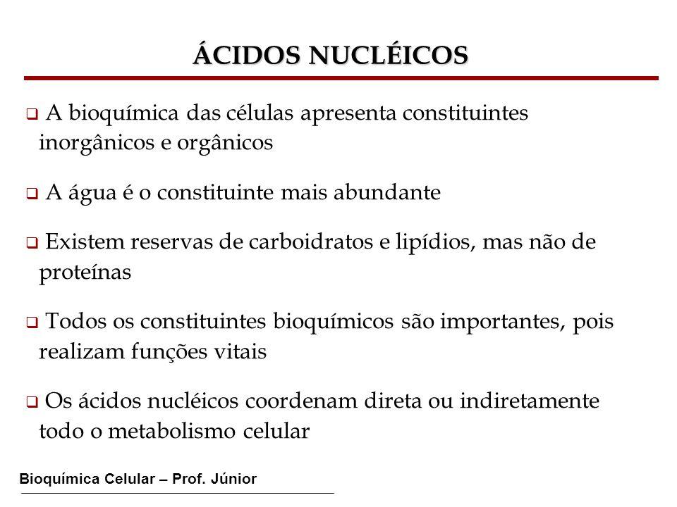 Bioquímica Celular – Prof. Júnior ÁCIDOS NUCLÉICOS A bioquímica das células apresenta constituintes inorgânicos e orgânicos A água é o constituinte ma