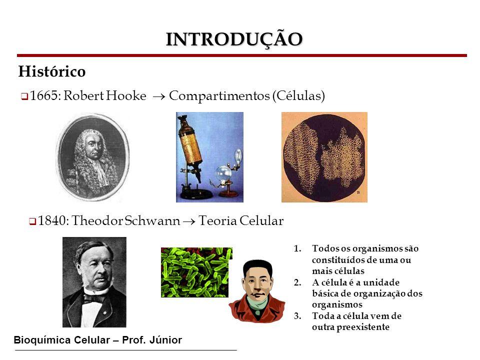 Bioquímica Celular – Prof. Júnior INTRODUÇÃO Histórico 1665: Robert Hooke Compartimentos (Células) 1840: Theodor Schwann Teoria Celular 1.Todos os org