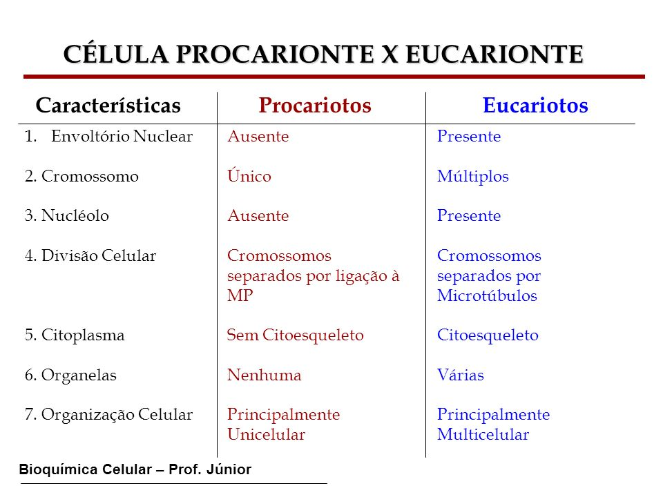Bioquímica Celular – Prof. Júnior CÉLULA PROCARIONTE X EUCARIONTE Características Procariotos Eucariotos 1.Envoltório Nuclear 2. Cromossomo 3. Nucléol