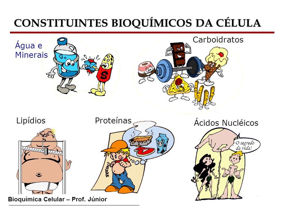 Bioquímica Celular – Prof. Júnior CONSTITUINTES BIOQUÍMICOS DA CÉLULA Água e Minerais Carboidratos ProteínasLipídios Ácidos Nucléicos O segredo da vid