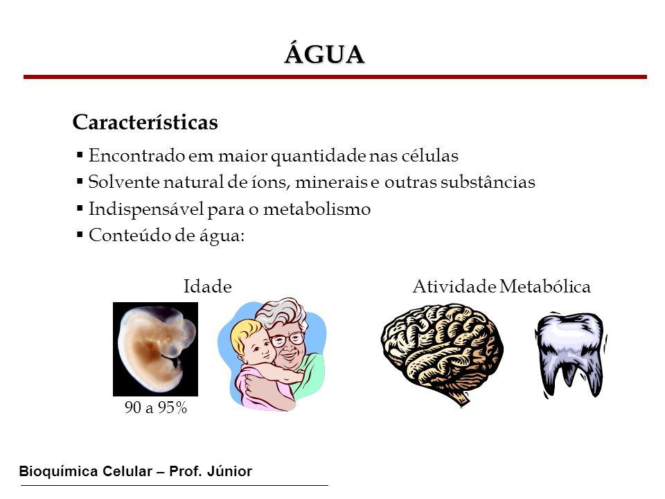 Bioquímica Celular – Prof. Júnior ÁGUA Características Encontrado em maior quantidade nas células Solvente natural de íons, minerais e outras substânc