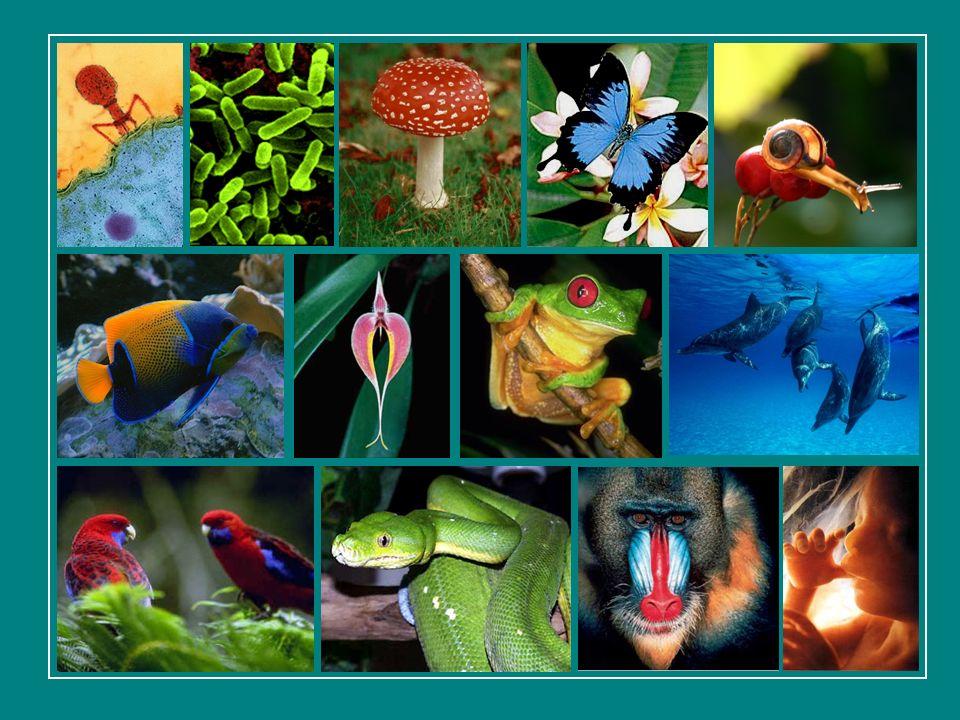 As extinções nos privam de oportunidades para estudar e entender as relações ecológicas entre os organismos.