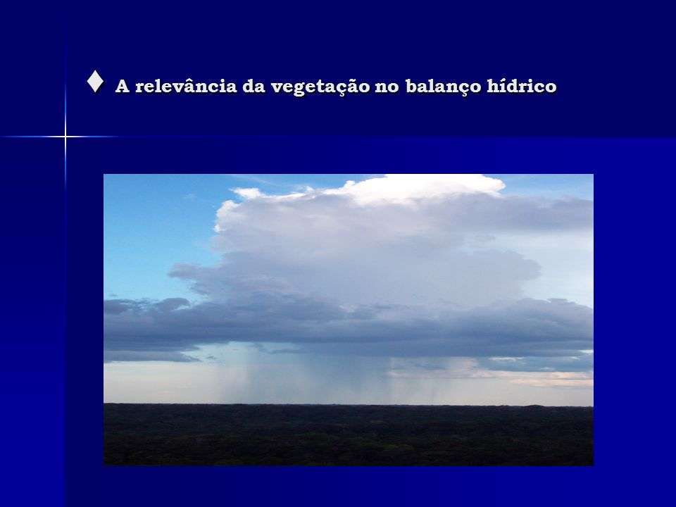 A relevância da vegetação no balanço hídrico A relevância da vegetação no balanço hídrico