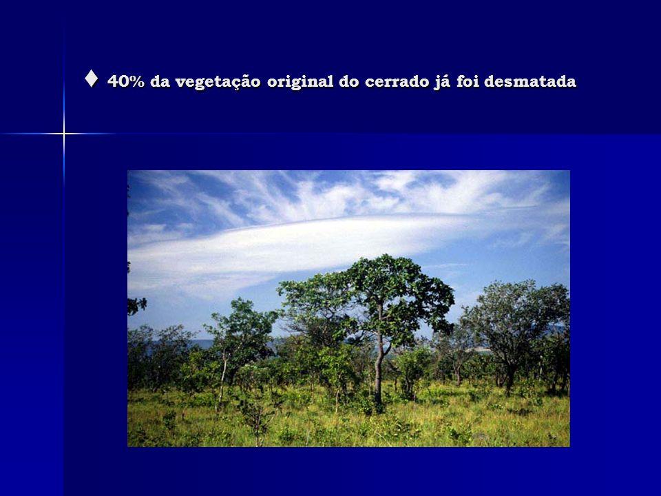40% da vegetação original do cerrado já foi desmatada 40% da vegetação original do cerrado já foi desmatada