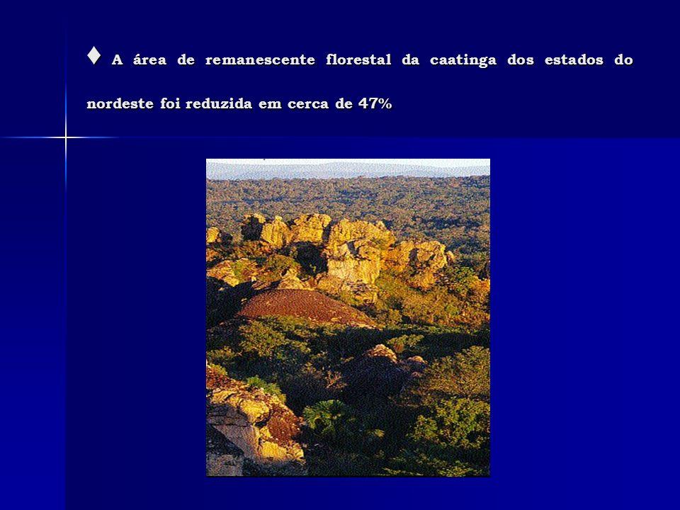 A área de remanescente florestal da caatinga dos estados do nordeste foi reduzida em cerca de 47% A área de remanescente florestal da caatinga dos est