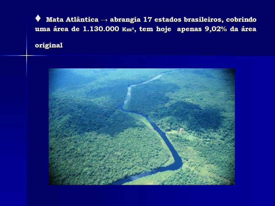 Mata Atlântica abrangia 17 estados brasileiros, cobrindo uma área de 1.130.000 Km², tem hoje apenas 9,02% da área original Mata Atlântica abrangia 17