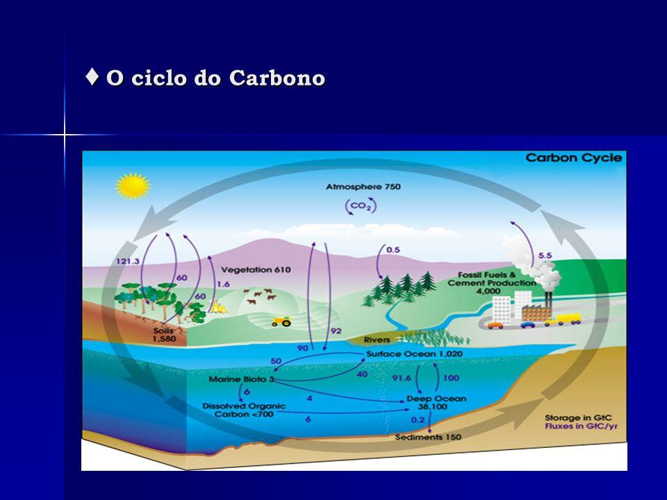 O ciclo do Carbono O ciclo do Carbono