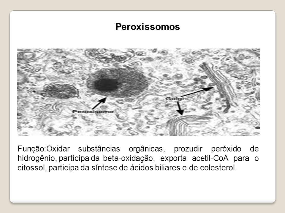 Função:Oxidar substâncias orgânicas, prozudir peróxido de hidrogênio, participa da beta-oxidação, exporta acetil-CoA para o citossol, participa da sín