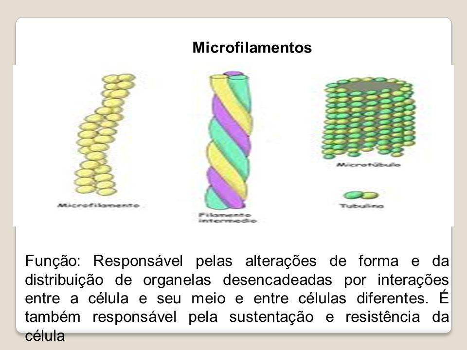 Função: Responsável pelas alterações de forma e da distribuição de organelas desencadeadas por interações entre a célula e seu meio e entre células di