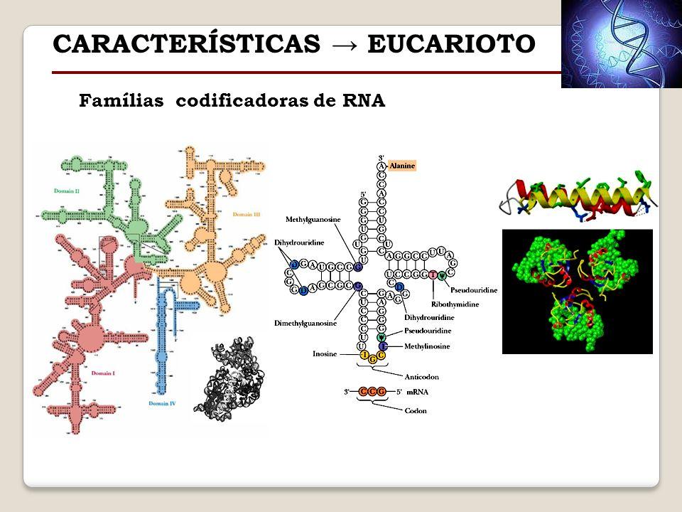 Famílias codificadoras de RNA CARACTERÍSTICAS EUCARIOTO