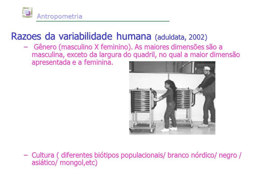 Antropometria Antropometria Razoes da variabilidade humana (aduldata, 2002) – Gênero (masculino X feminino). As maiores dimensões são a masculina, exc