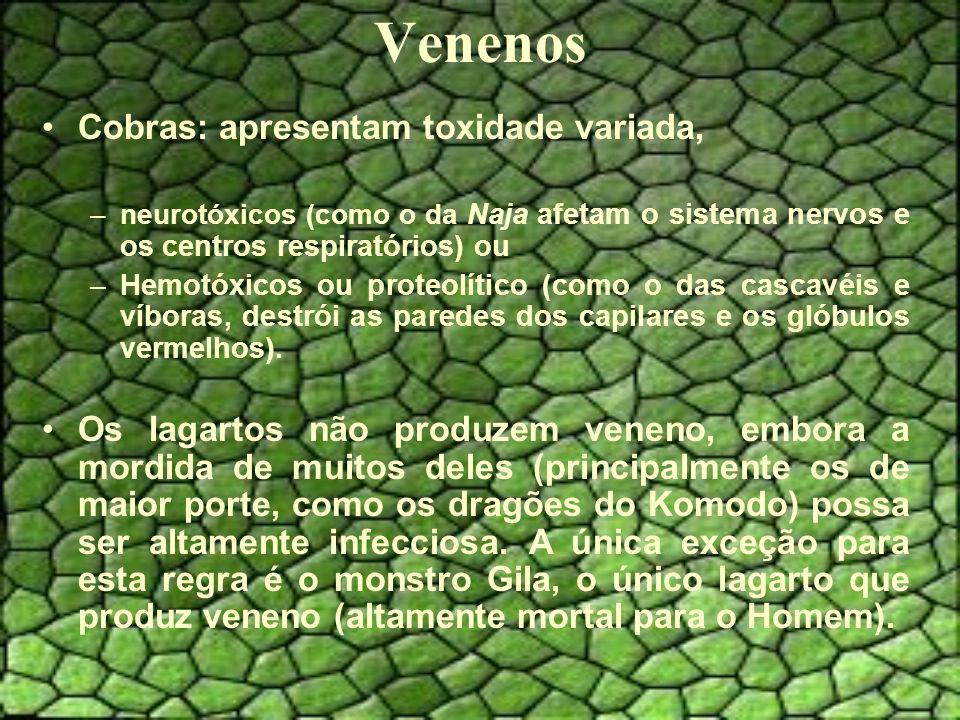 Venenos Cobras: apresentam toxidade variada, –neurotóxicos (como o da Naja afetam o sistema nervos e os centros respiratórios) ou –Hemotóxicos ou proteolítico (como o das cascavéis e víboras, destrói as paredes dos capilares e os glóbulos vermelhos).