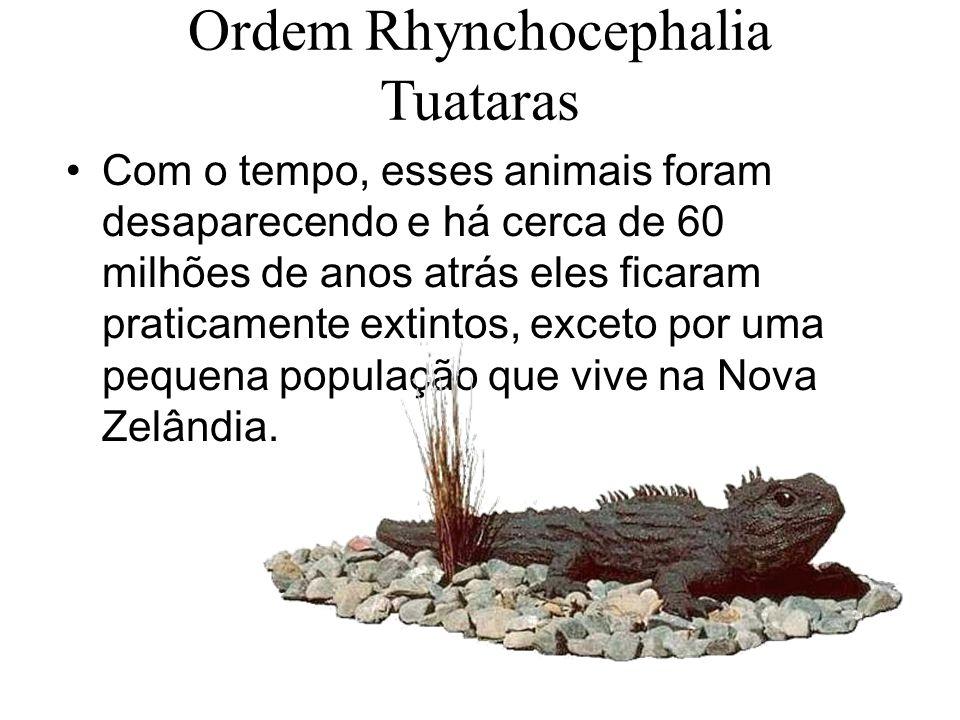 Ordem Rhynchocephalia Tuataras Com o tempo, esses animais foram desaparecendo e há cerca de 60 milhões de anos atrás eles ficaram praticamente extintos, exceto por uma pequena população que vive na Nova Zelândia.