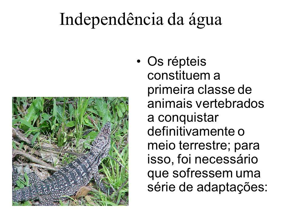 Independência da água Os répteis constituem a primeira classe de animais vertebrados a conquistar definitivamente o meio terrestre; para isso, foi necessário que sofressem uma série de adaptações: