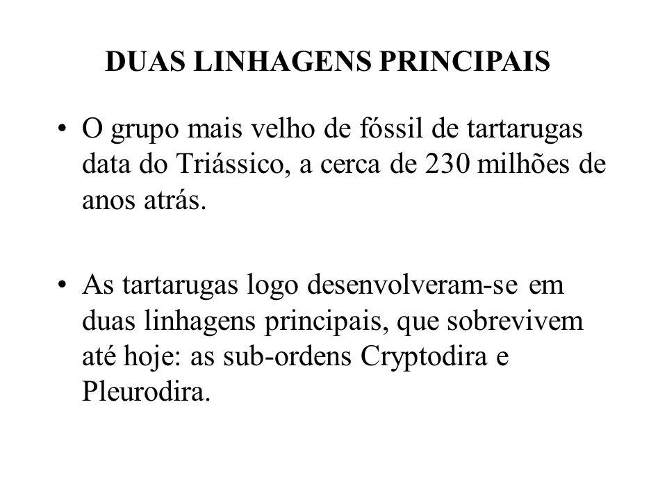 O grupo mais velho de fóssil de tartarugas data do Triássico, a cerca de 230 milhões de anos atrás.
