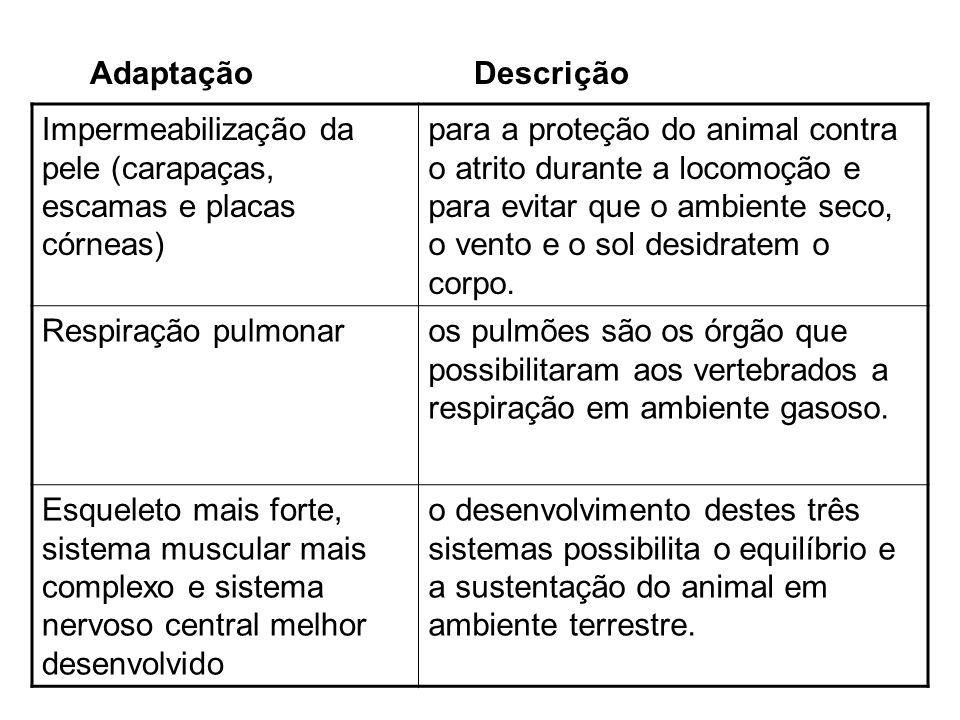 Subordem Amphisbaenia Pele flexível dividida em inúmeros anéis Ausência de olhos e ouvidos visíveis Encontrados na América do Sul e África tropical
