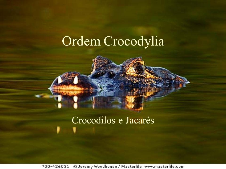 Ordem Crocodylia Crocodilos e Jacarés