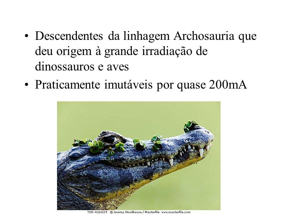 Descendentes da linhagem Archosauria que deu origem à grande irradiação de dinossauros e aves Praticamente imutáveis por quase 200mA