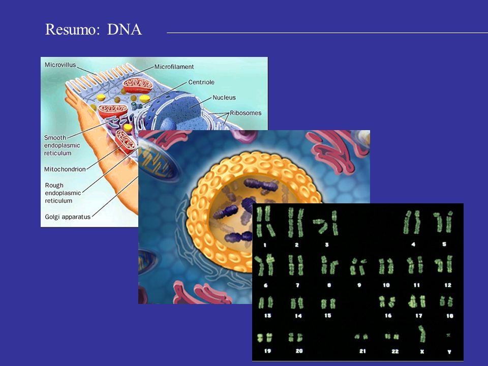 Resumo: DNA
