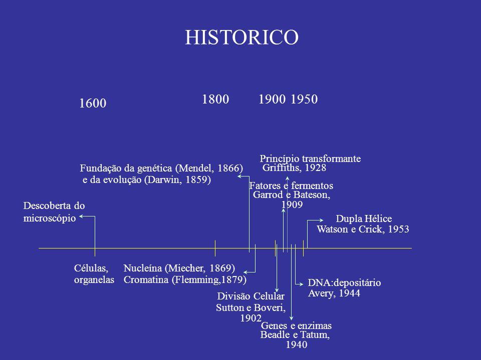 HISTORICO 1600 1800 Células, organelas 1900 Genes e enzimas Beadle e Tatum, 1940 DNA:depositário Avery, 1944 Dupla Hélice Watson e Crick, 1953 Descobe