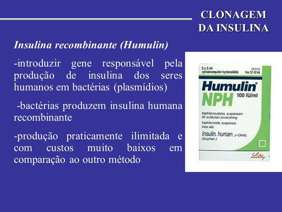 CLONAGEM DA INSULINA Insulina recombinante (Humulin) -introduzir gene responsável pela produção de insulina dos seres humanos em bactérias (plasmídios