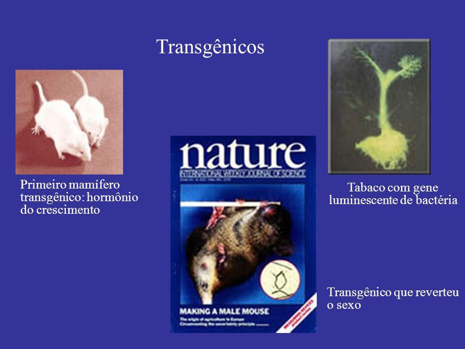 Transgênicos Primeiro mamífero transgênico: hormônio do crescimento Transgênico que reverteu o sexo Tabaco com gene luminescente de bactéria