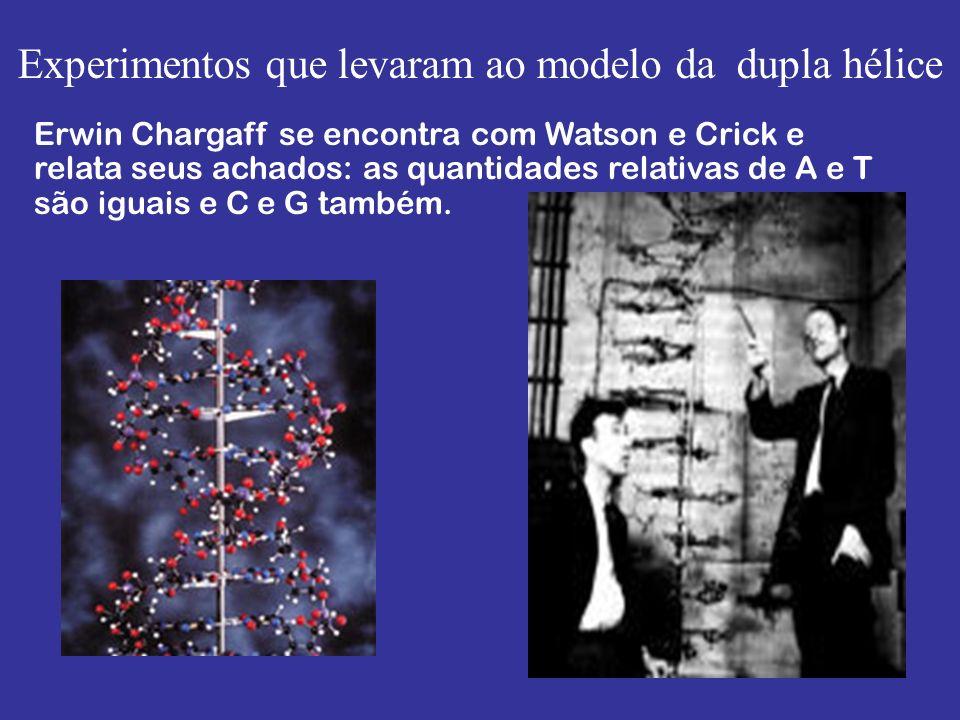 Experimentos que levaram ao modelo da dupla hélice Erwin Chargaff se encontra com Watson e Crick e relata seus achados: as quantidades relativas de A