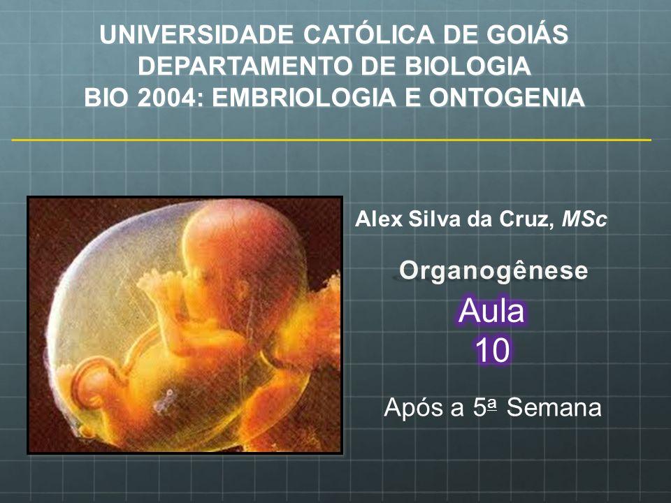 UNIVERSIDADE CATÓLICA DE GOIÁS DEPARTAMENTO DE BIOLOGIA BIO 2004: EMBRIOLOGIA E ONTOGENIA Alex Silva da Cruz, MSc Após a 5 a Semana