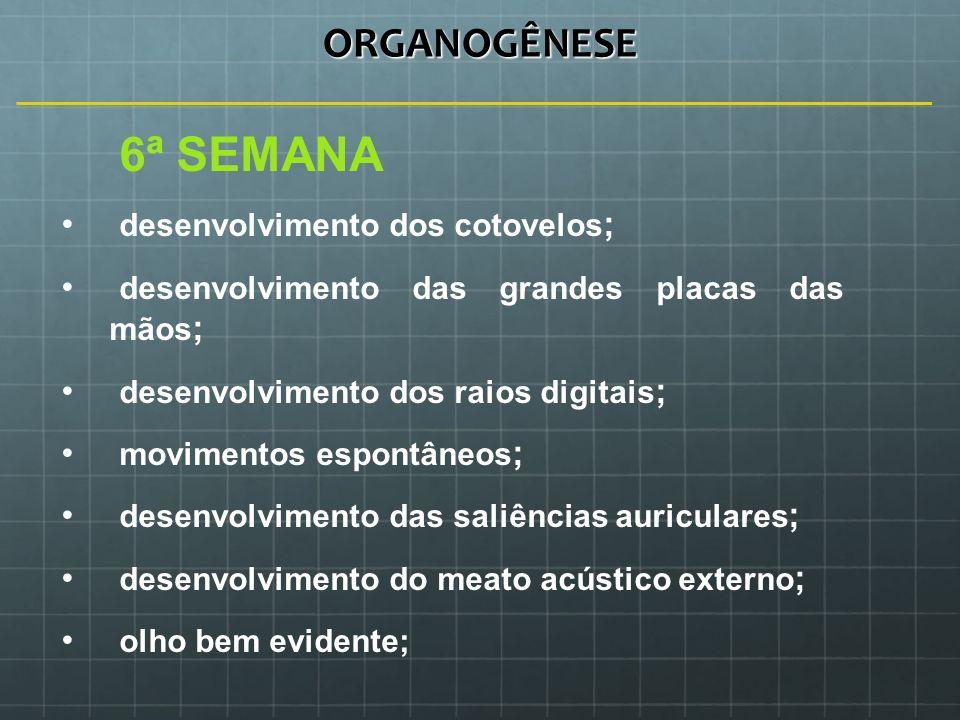ORGANOGÊNESE 6ª SEMANA desenvolvimento dos cotovelos ; desenvolvimento das grandes placas das mãos ; desenvolvimento dos raios digitais ; movimentos e