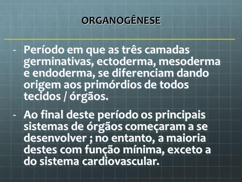 ORGANOGÊNESE -Período em que as três camadas germinativas, ectoderma, mesoderma e endoderma, se diferenciam dando origem aos primórdios de todos tecid