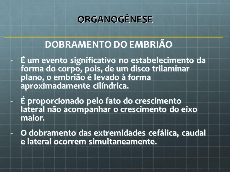 ORGANOGÊNESE DOBRAMENTO DO EMBRIÃO -É um evento significativo no estabelecimento da forma do corpo, pois, de um disco trilaminar plano, o embrião é le