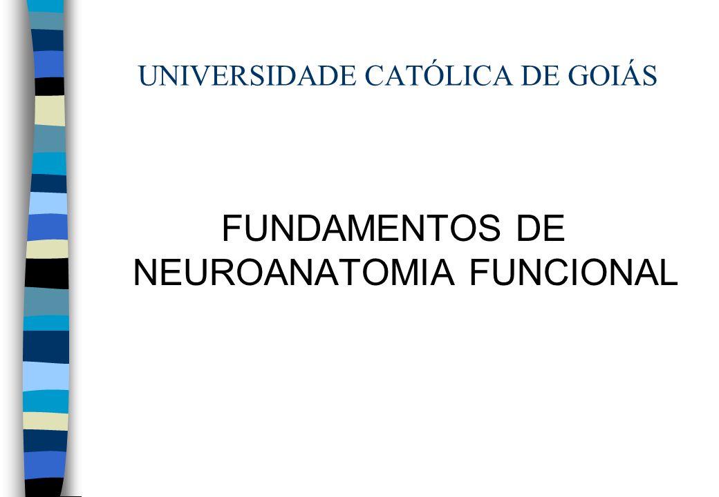 UNIVERSIDADE CATÓLICA DE GOIÁS FUNDAMENTOS DE NEUROANATOMIA FUNCIONAL