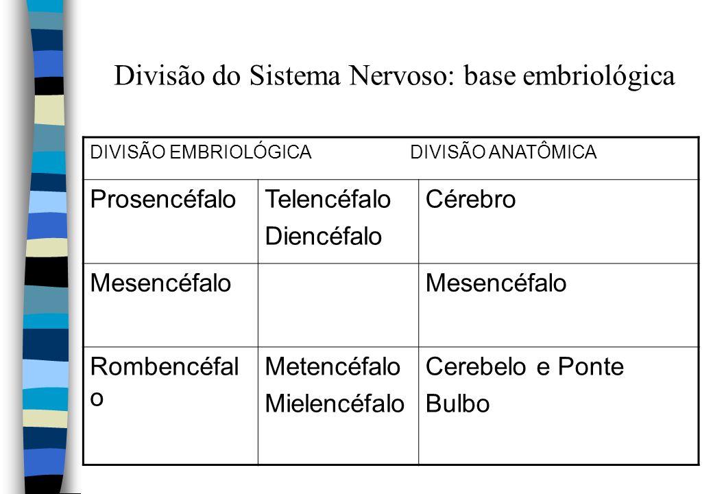 Divisão do Sistema Nervoso: base embriológica DIVISÃO EMBRIOLÓGICA DIVISÃO ANATÔMICA ProsencéfaloTelencéfalo Diencéfalo Cérebro Mesencéfalo Rombencéfa