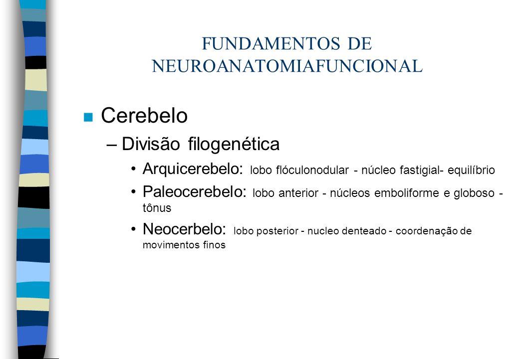 n Cerebelo –Divisão filogenética Arquicerebelo: lobo flóculonodular - núcleo fastigial- equilíbrio Paleocerebelo: lobo anterior - núcleos emboliforme