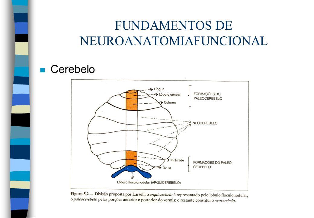 FUNDAMENTOS DE NEUROANATOMIAFUNCIONAL n Cerebelo