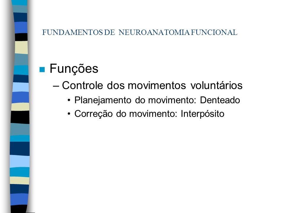 FUNDAMENTOS DE NEUROANATOMIA FUNCIONAL n Funções –Controle dos movimentos voluntários Planejamento do movimento: Denteado Correção do movimento: Inter