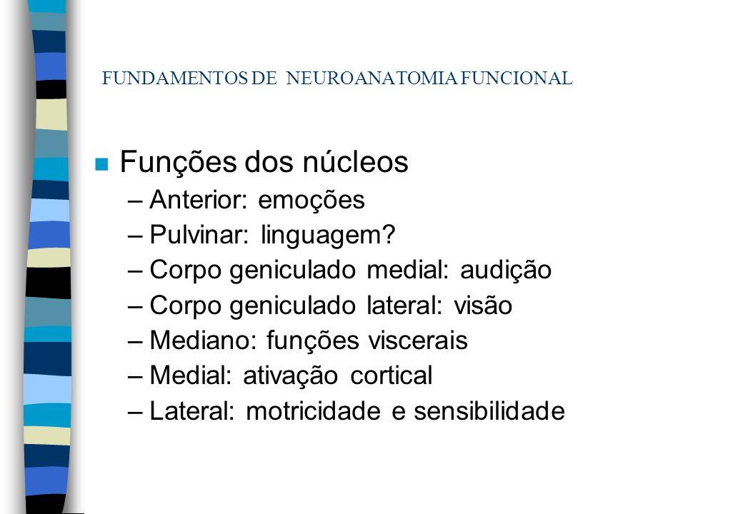 FUNDAMENTOS DE NEUROANATOMIA FUNCIONAL n Funções dos núcleos –Anterior: emoções –Pulvinar: linguagem? –Corpo geniculado medial: audição –Corpo genicul