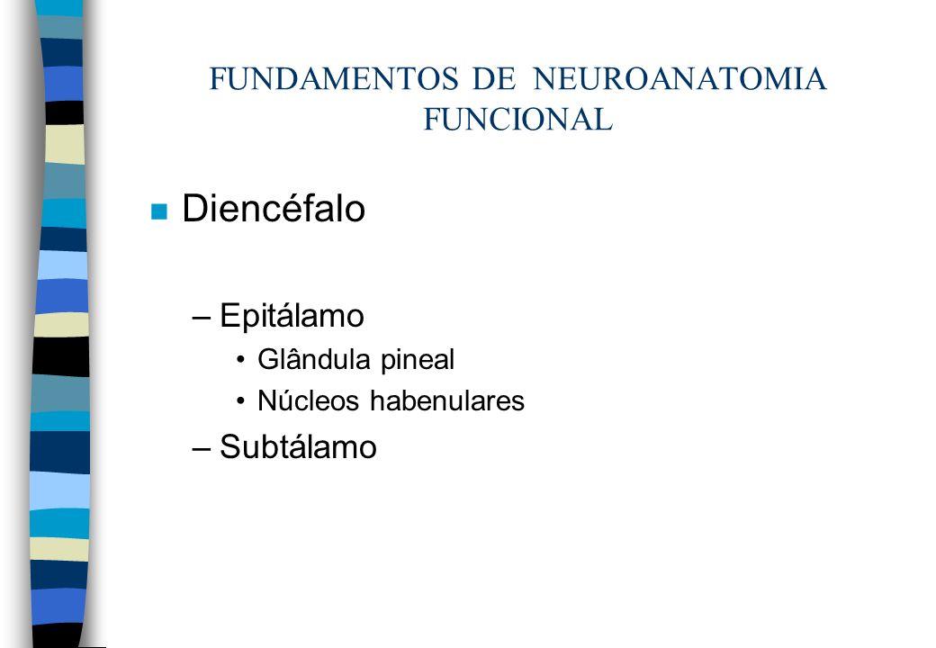 n Diencéfalo –Epitálamo Glândula pineal Núcleos habenulares –Subtálamo