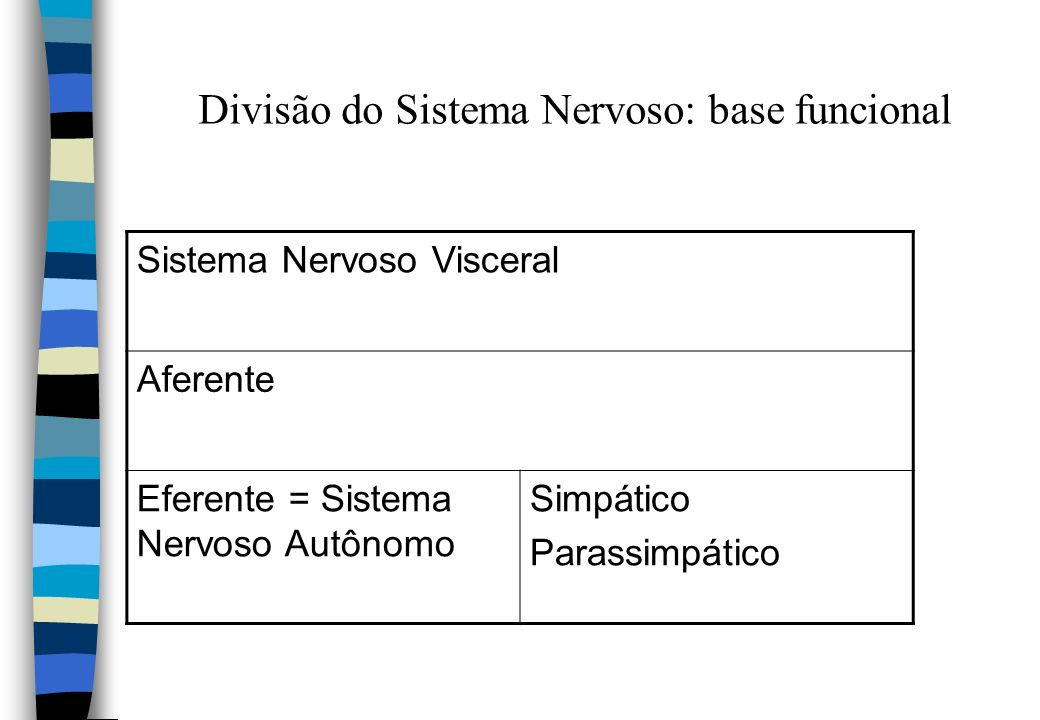 Divisão do Sistema Nervoso: base funcional Sistema Nervoso Visceral Aferente Eferente = Sistema Nervoso Autônomo Simpático Parassimpático