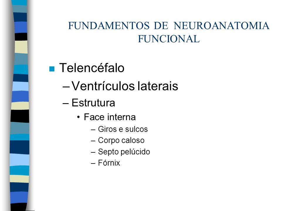 n Telencéfalo –Ventrículos laterais –Estrutura Face interna –Giros e sulcos –Corpo caloso –Septo pelúcido –Fórnix