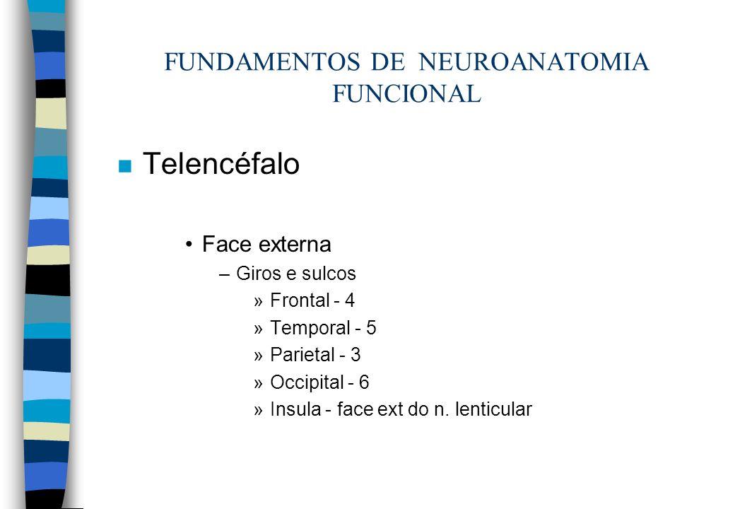 n Telencéfalo Face externa –Giros e sulcos »Frontal - 4 »Temporal - 5 »Parietal - 3 »Occipital - 6 »Insula - face ext do n. lenticular