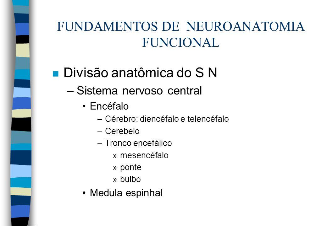 FUNDAMENTOS DE NEUROANATOMIA FUNCIONAL n Divisão anatômica do S N –Sistema nervoso central Encéfalo –Cérebro: diencéfalo e telencéfalo –Cerebelo –Tron