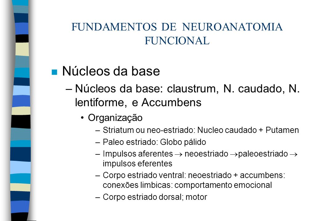 n Núcleos da base –Núcleos da base: claustrum, N. caudado, N. lentiforme, e Accumbens Organização –Striatum ou neo-estriado: Nucleo caudado + Putamen