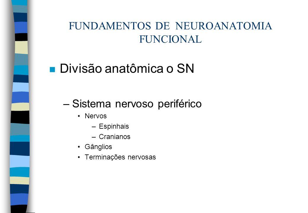 FUNDAMENTOS DE NEUROANATOMIA FUNCIONAL n Divisão anatômica o SN –Sistema nervoso periférico Nervos –Espinhais –Cranianos Gânglios Terminações nervosas
