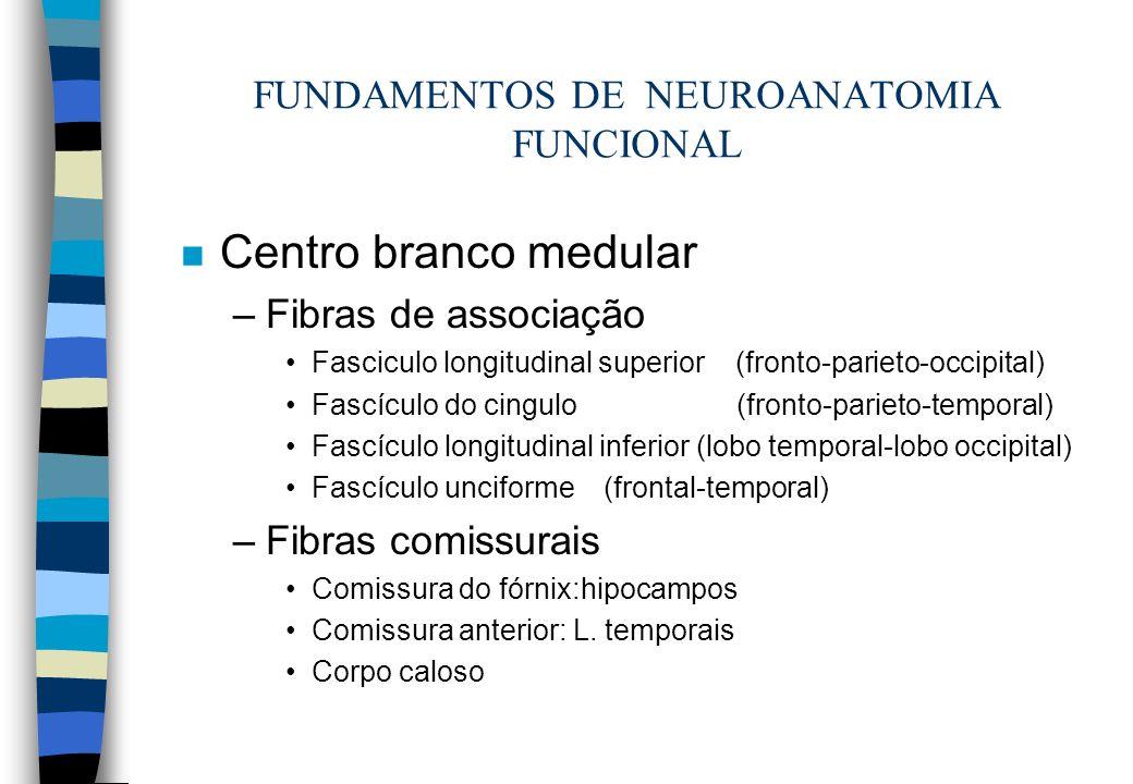 FUNDAMENTOS DE NEUROANATOMIA FUNCIONAL n Centro branco medular –Fibras de associação Fasciculo longitudinal superior (fronto-parieto-occipital) Fascíc